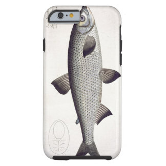 Salmon (Salmo Maraena) plate XXVII from 'Ichthyolo Tough iPhone 6 Case