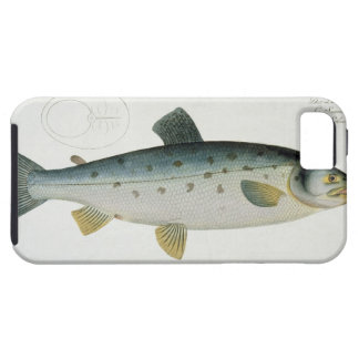 Salmon (Salmo Salar) plate XX from 'Ichthyologie, iPhone 5 Case
