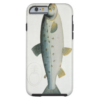 Salmon (Salmo Salar) plate XX from 'Ichthyologie, Tough iPhone 6 Case