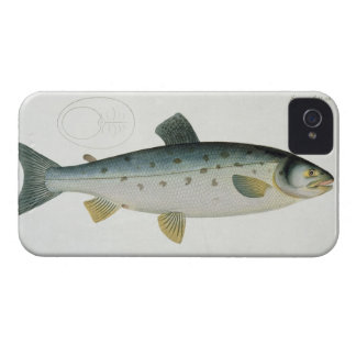 Salmon (Salmo Salar) plate XX from 'Ichthyologie, iPhone 4 Case-Mate Cases