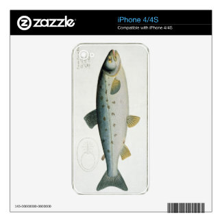 Salmon (Salmo Salar) plate XX from 'Ichthyologie, Skin For iPhone 4S