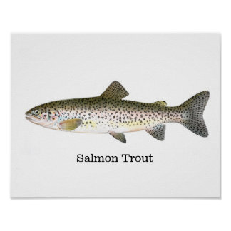 Salmon Trout Fish Poster