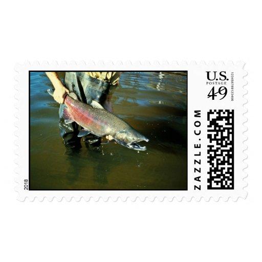 Salmones de Chinook Envio