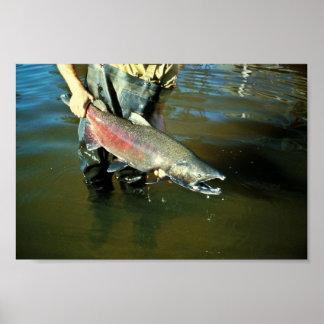 Salmones de Chinook Póster