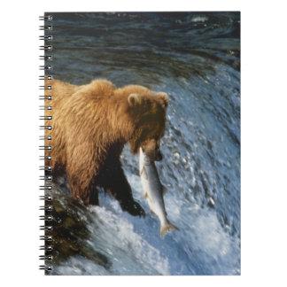 Salmones de cogida de Alaska del oso de Brown en l Libros De Apuntes Con Espiral