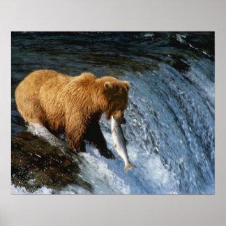 Salmones de cogida de Alaska del oso de Brown en l Impresiones