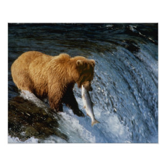 Salmones de cogida de Alaska del oso de Brown en l Póster
