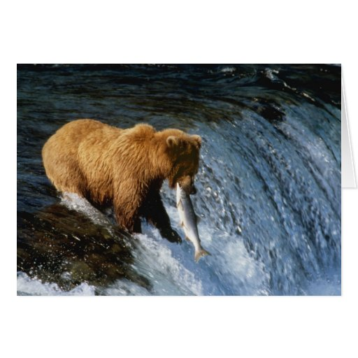 Salmones de cogida de Alaska del oso de Brown en l Tarjetón