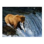 Salmones de cogida de Alaska del oso de Brown en Tarjetas Postales