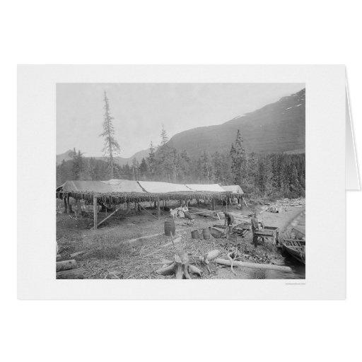 Salmones de sequía en Alaska 1915 Felicitacion