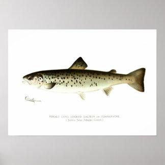 Salmones sin mar femeninos o Quaniche Póster