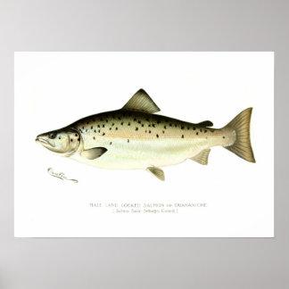 Salmones sin mar masculinos o Quaniche Póster