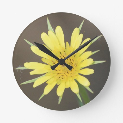 Salsifí amarillo reloj redondo mediano
