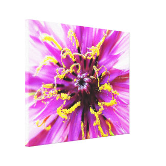 Salsify Flower Stretched Canvas Prints