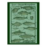 Salt and Fresh Water Fish Chart Postcard