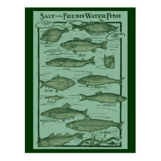 Salt and Fresh Water Fish Chart Postcard