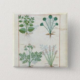 Salt Bush and Anthora Absinthium and Cardamom Button