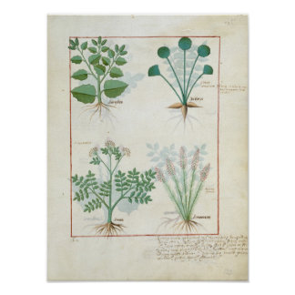 Salt Bush and Anthora Absinthium and Cardamom Poster