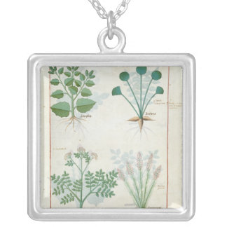 Salt Bush and Anthora Absinthium and Cardamom Silver Plated Necklace