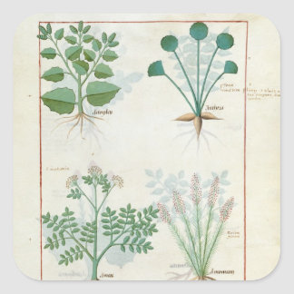 Salt Bush and Anthora Absinthium and Cardamom Square Sticker