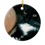 Salt Globe and Cat Psychic - Photograph Christmas Tree Ornament