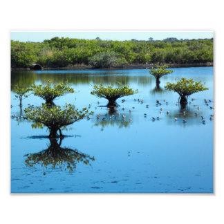 Salt Marsh with Mangroves 8x10 Photo Print