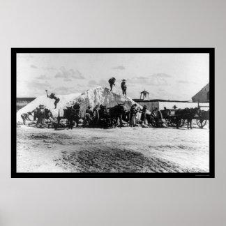 Salt Mining Turks and Caicos Islands 1896 Poster