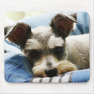Salt & Pepper Mini Schnauzer Mouse Pad