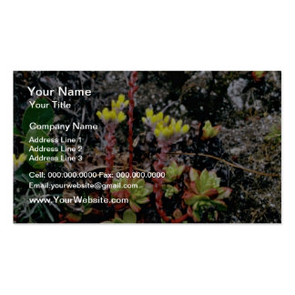 Salt Point State Park - Wild Flowers Pink flowers Double-Sided Standard Business Cards (Pack Of 100)