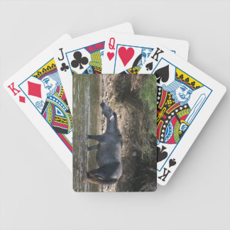 Salt River Crossing :: Arizona Wild Horses Bicycle Playing Cards