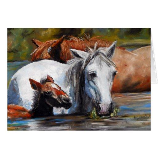 Salt River Foal Card