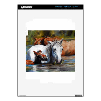 Salt River Foal iPad 3 Decal