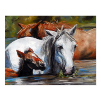 Salt River Foal Postcard