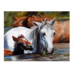 Salt River Foal Postcards