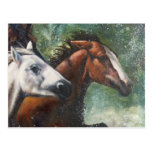 Salt River Wild Horses Postcards