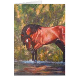Salt River Wild Stallion Tango Card