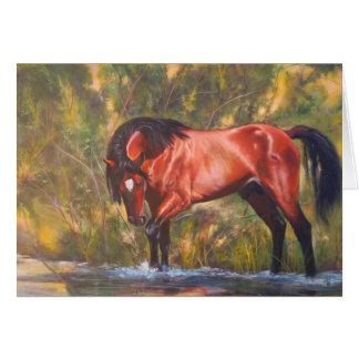 Salt River Wild Stallion Tango Greeting Card