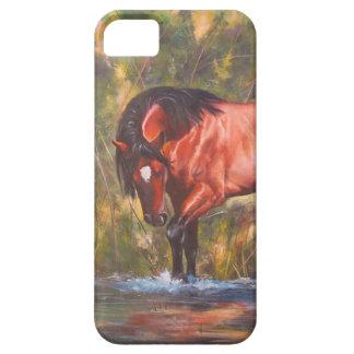 Salt River Wild Stallion Tango iPhone 5 Covers