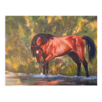 Salt River Wild Stallion Tango Postcard