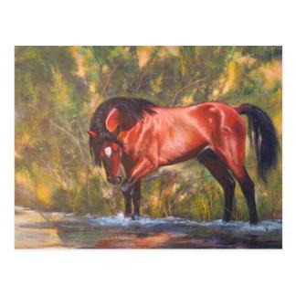 Salt River Wild Stallion Tango Post Cards