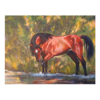 Salt River Wild Stallion Tango Postcard