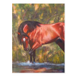 Salt River Wild Stallion Tango Postcards