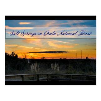 Salt Springs Postcard