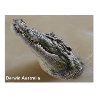 Salt water Crocodile Darwin Australia Postcard