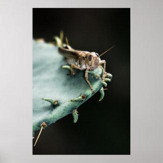 Saltamontes en el cactus posters