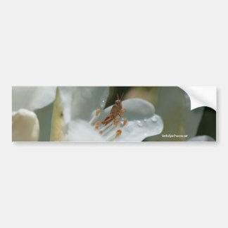 Saltamontes en pegatina para el parachoques de la  pegatina de parachoque