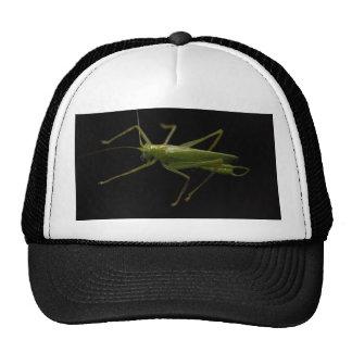 saltamontes gorras