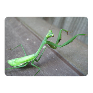 """Saltamontes/mantis religiosa invitación 5"""" x 7"""""""
