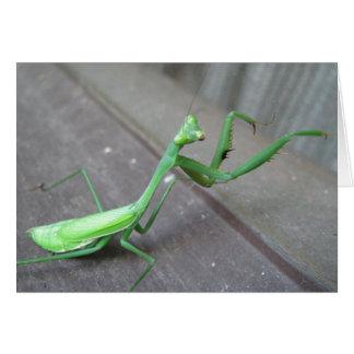 Saltamontes/mantis religiosa tarjeta de felicitación