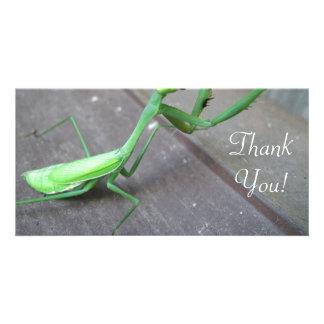 Saltamontes/mantis religiosa tarjetas personales con fotos